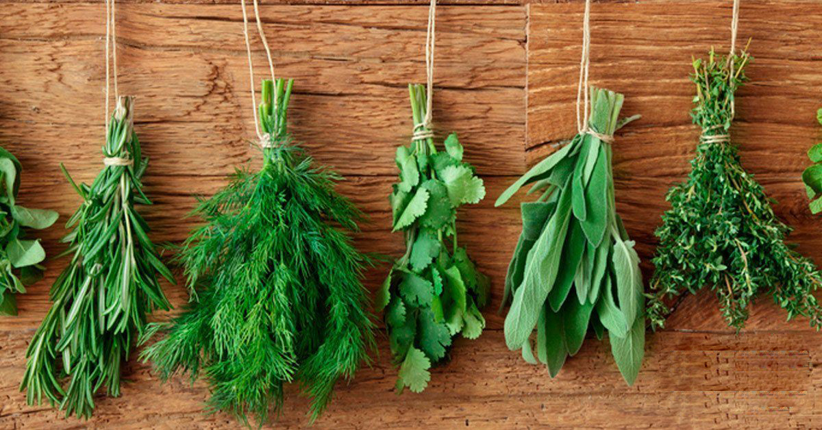 My 5 Most Loved Herbs To Grow At Home